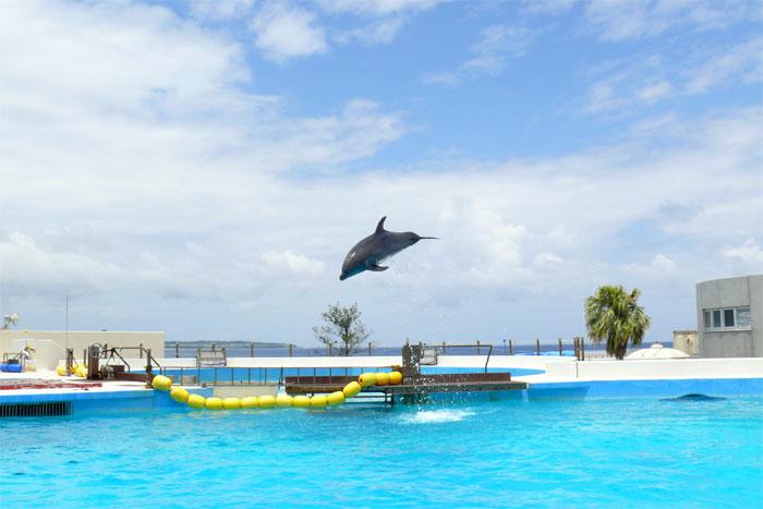 沖縄 美ら海水族館 イルカショー