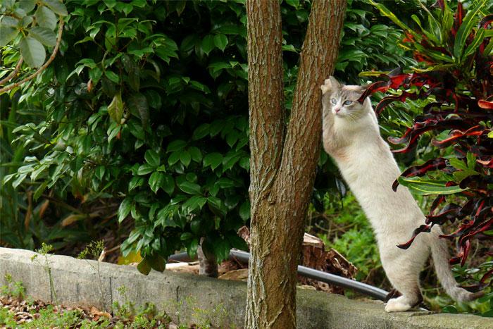 沖縄 美ら海水族館近くのカフェの猫