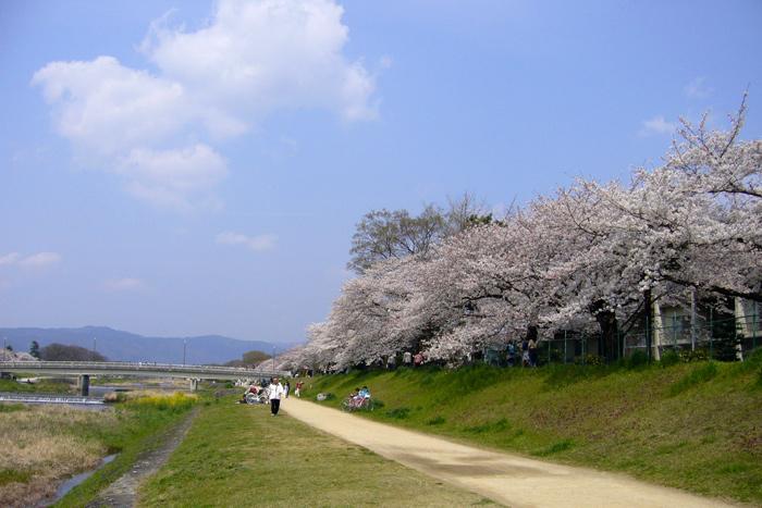 2007年4月8日の賀茂川
