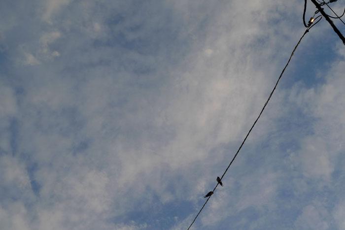 ツバメの夏空