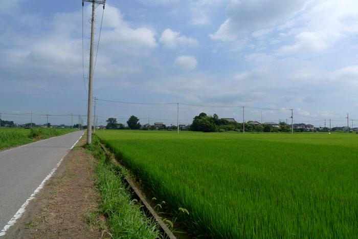 埼玉の風景