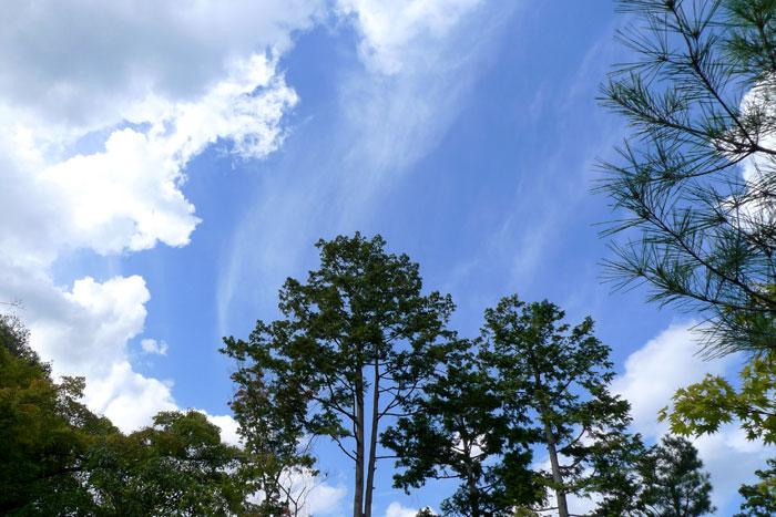 光悦寺で見上げた空