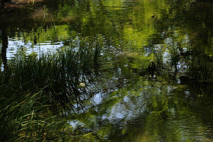 新緑の水面
