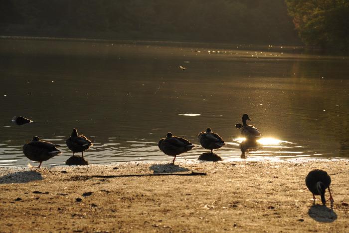 宝ケ池公園の日の出