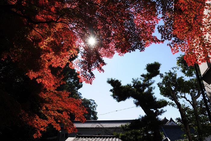 日の光を浴びる紅葉