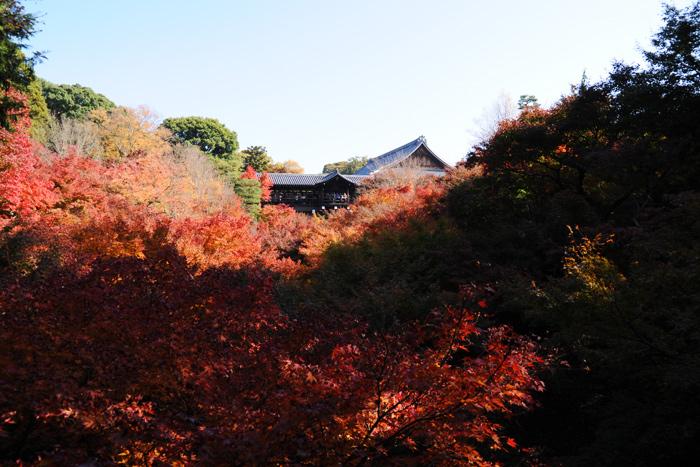 東福寺を見る
