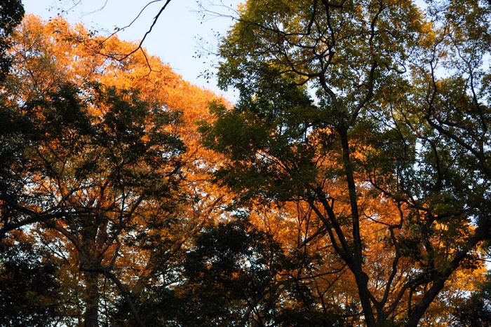 紅葉の糺の森
