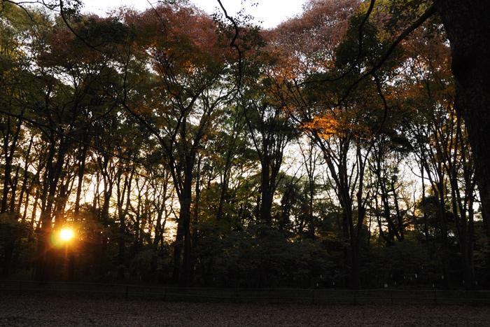 糺の森の夕暮れ