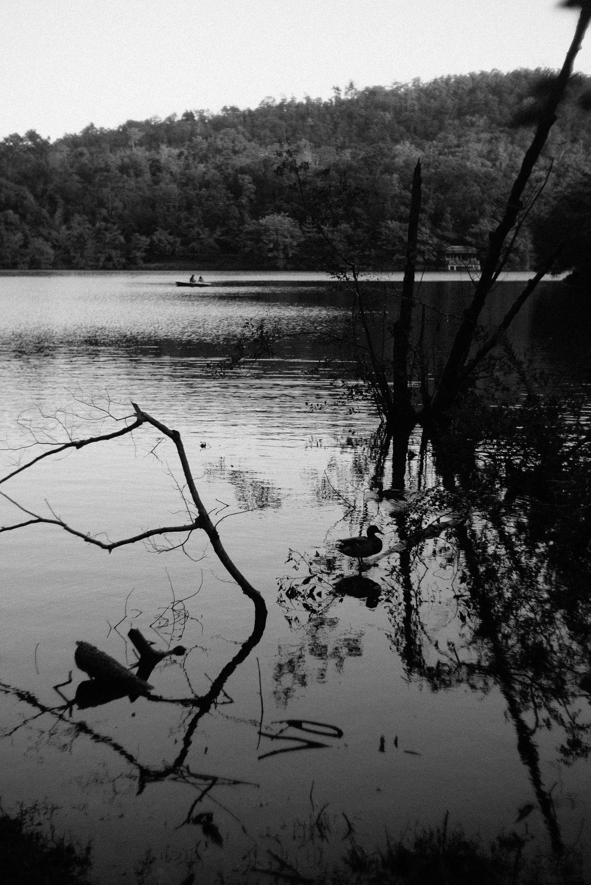 宝ヶ池公園 カモとボート