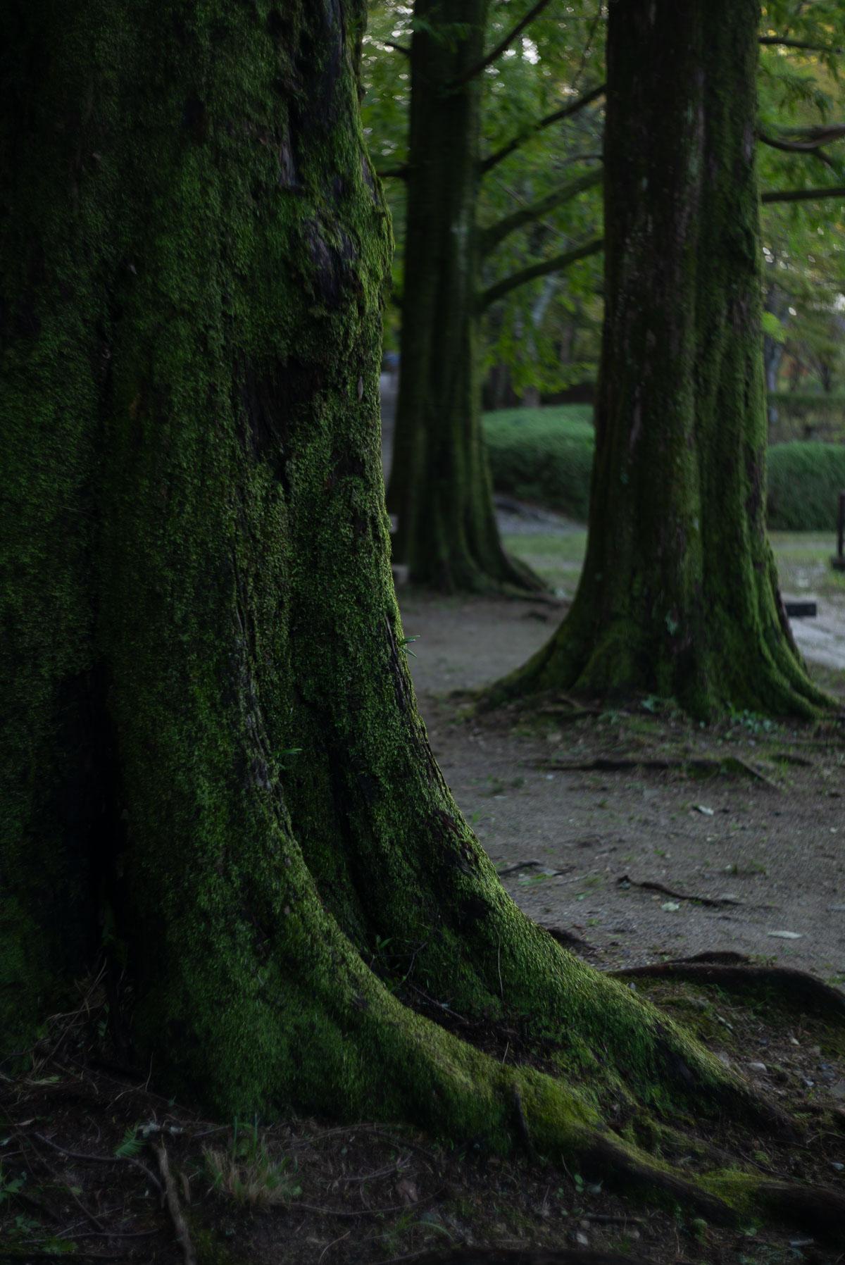 宝ヶ池公園の大きな木