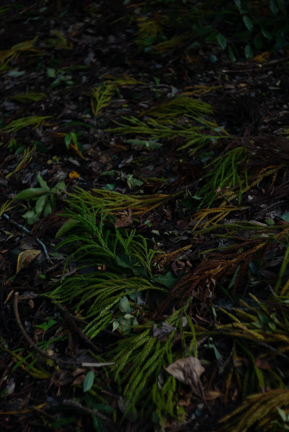 落ちていた色とりどりの葉