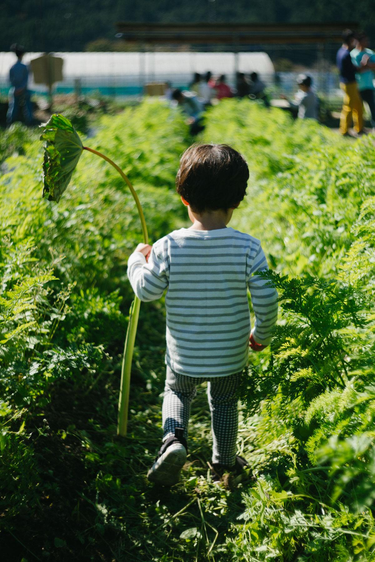 里芋の葉っぱを持って探検