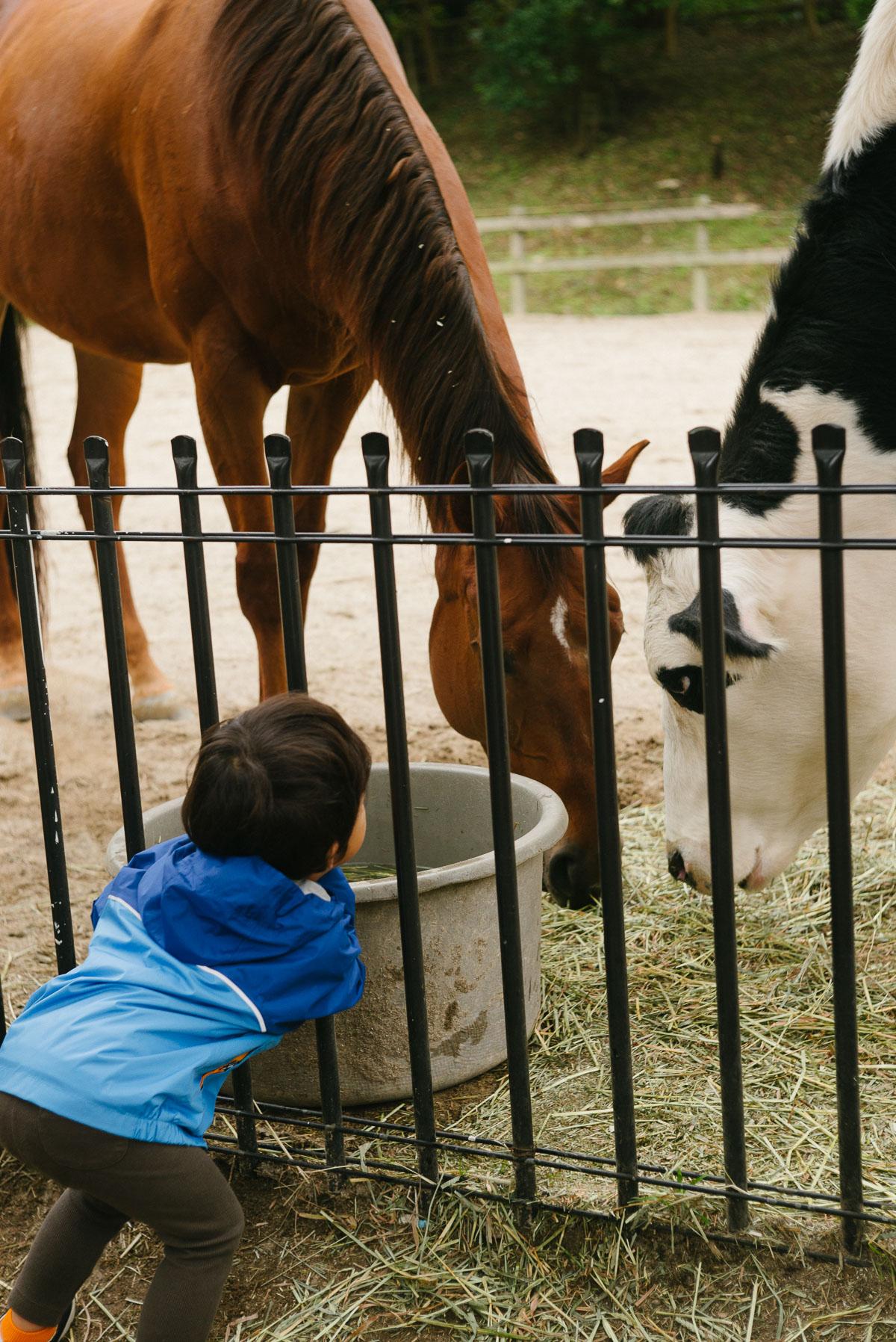 牛と馬とタイチ