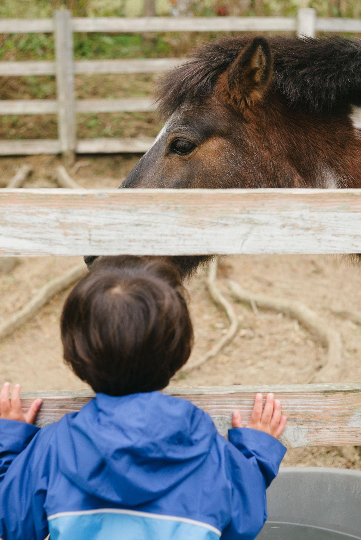 馬を眺めるタイチ