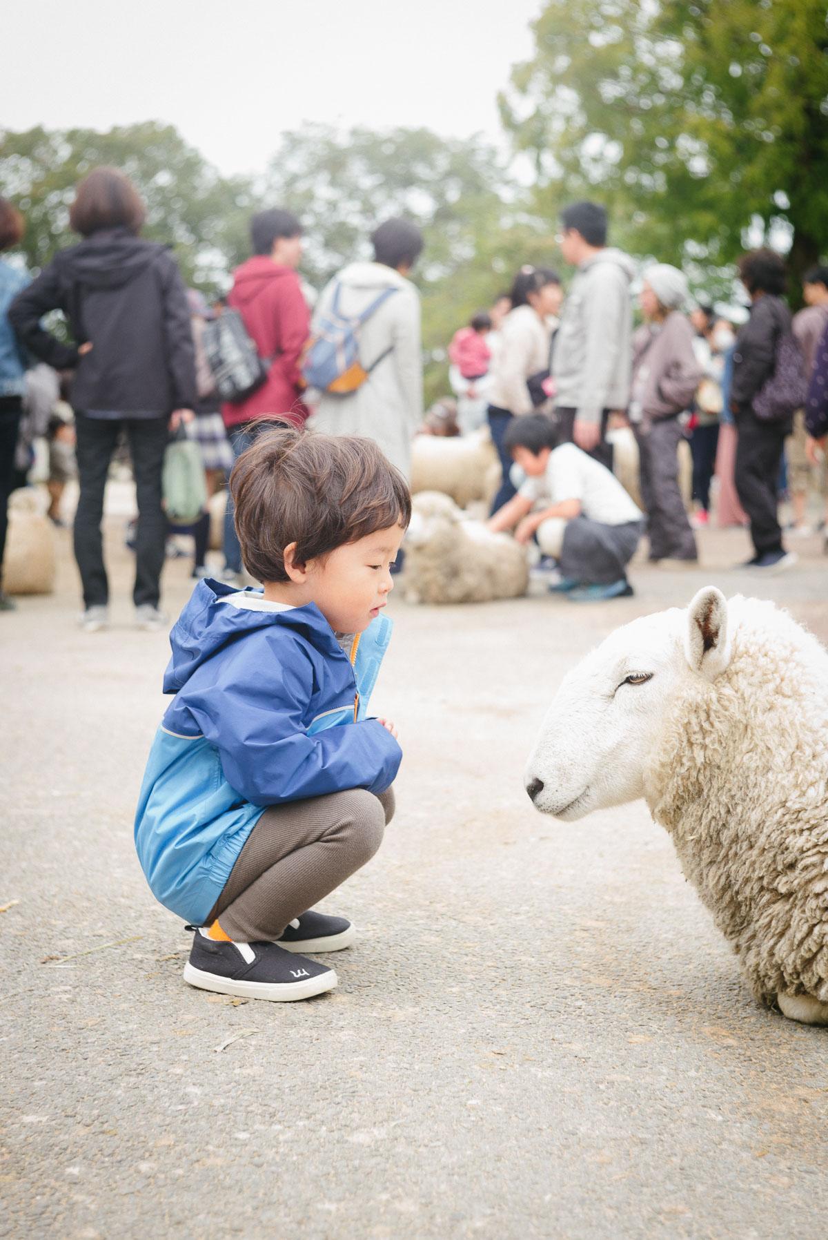 羊と向き合うタイチ