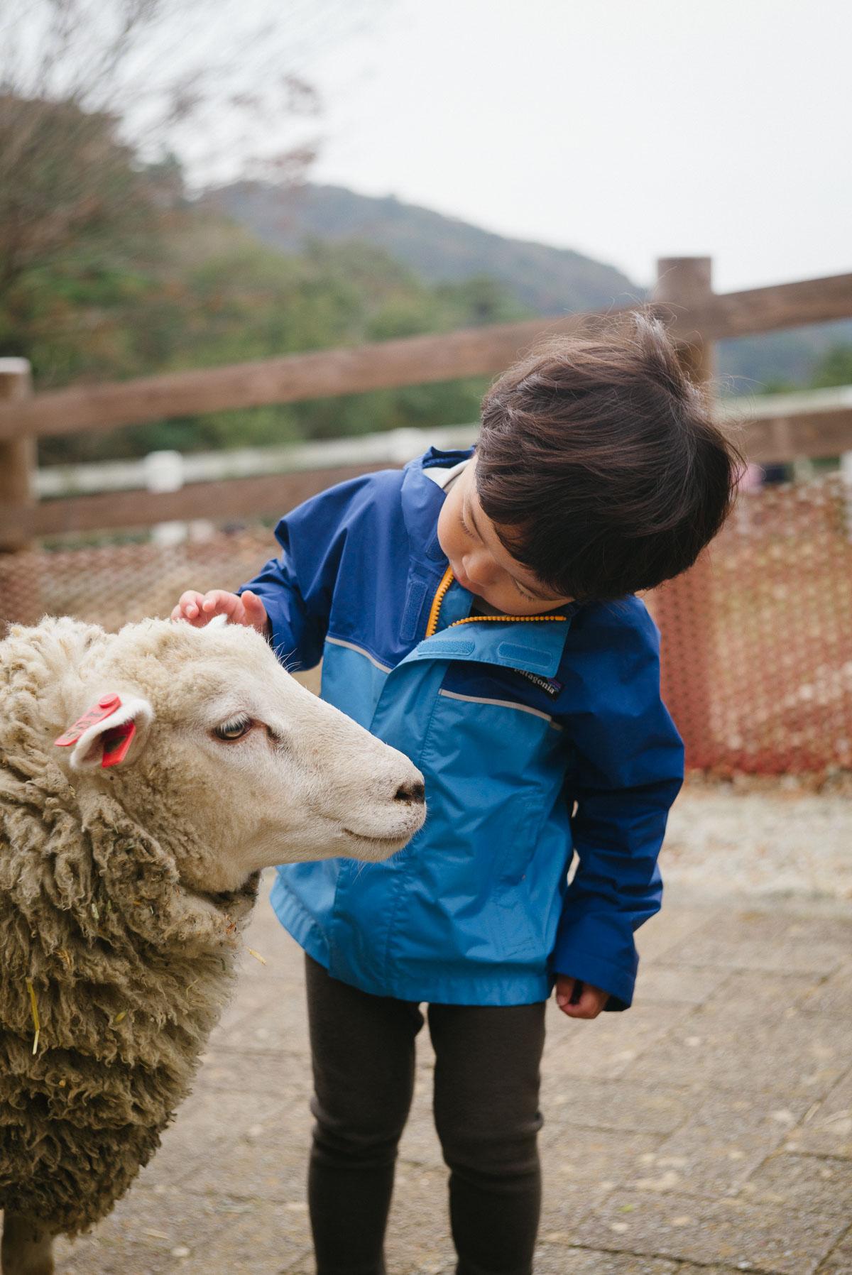 羊の耳を執拗に触るタイチ
