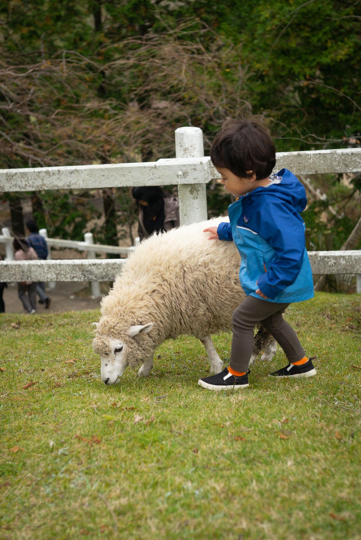 小さな赤ちゃん羊と