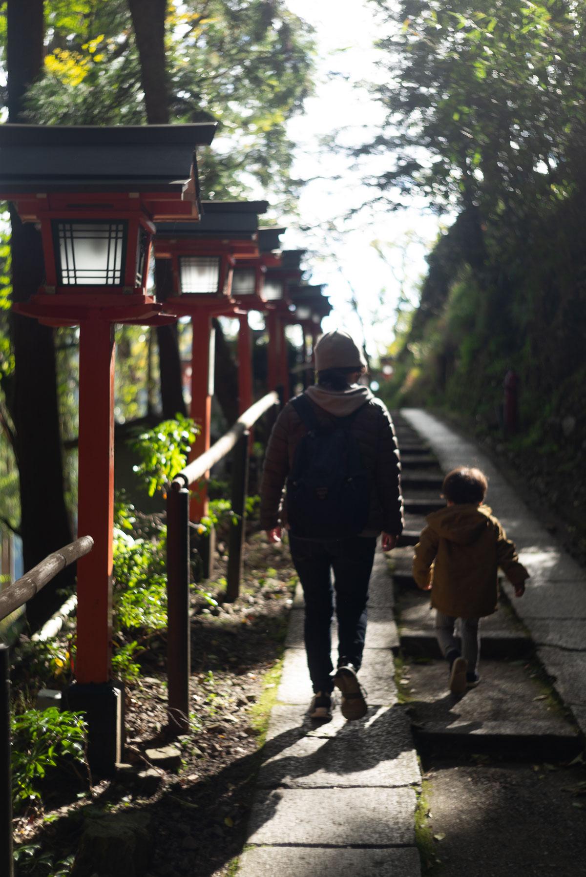 光がきれいな山道を歩く