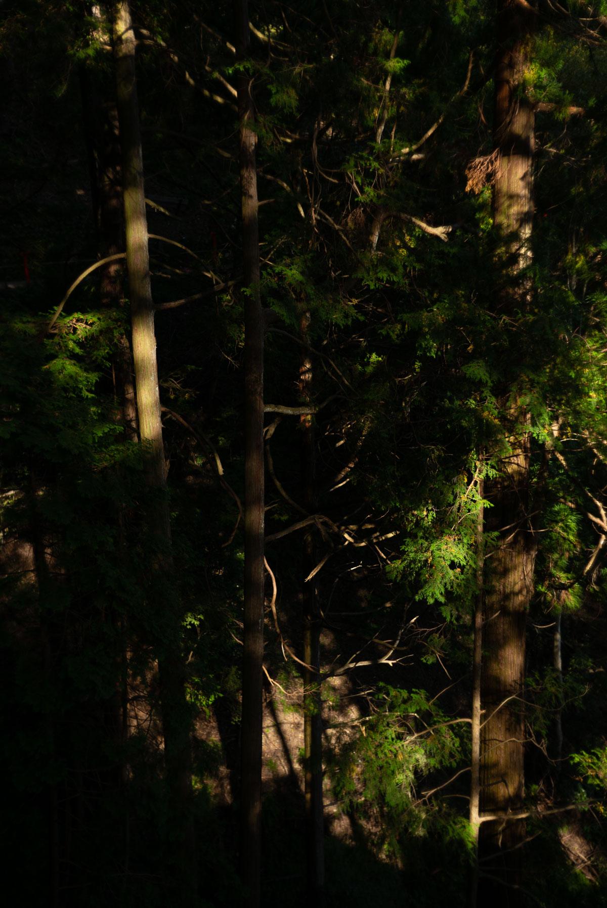 鞍馬山の陰影