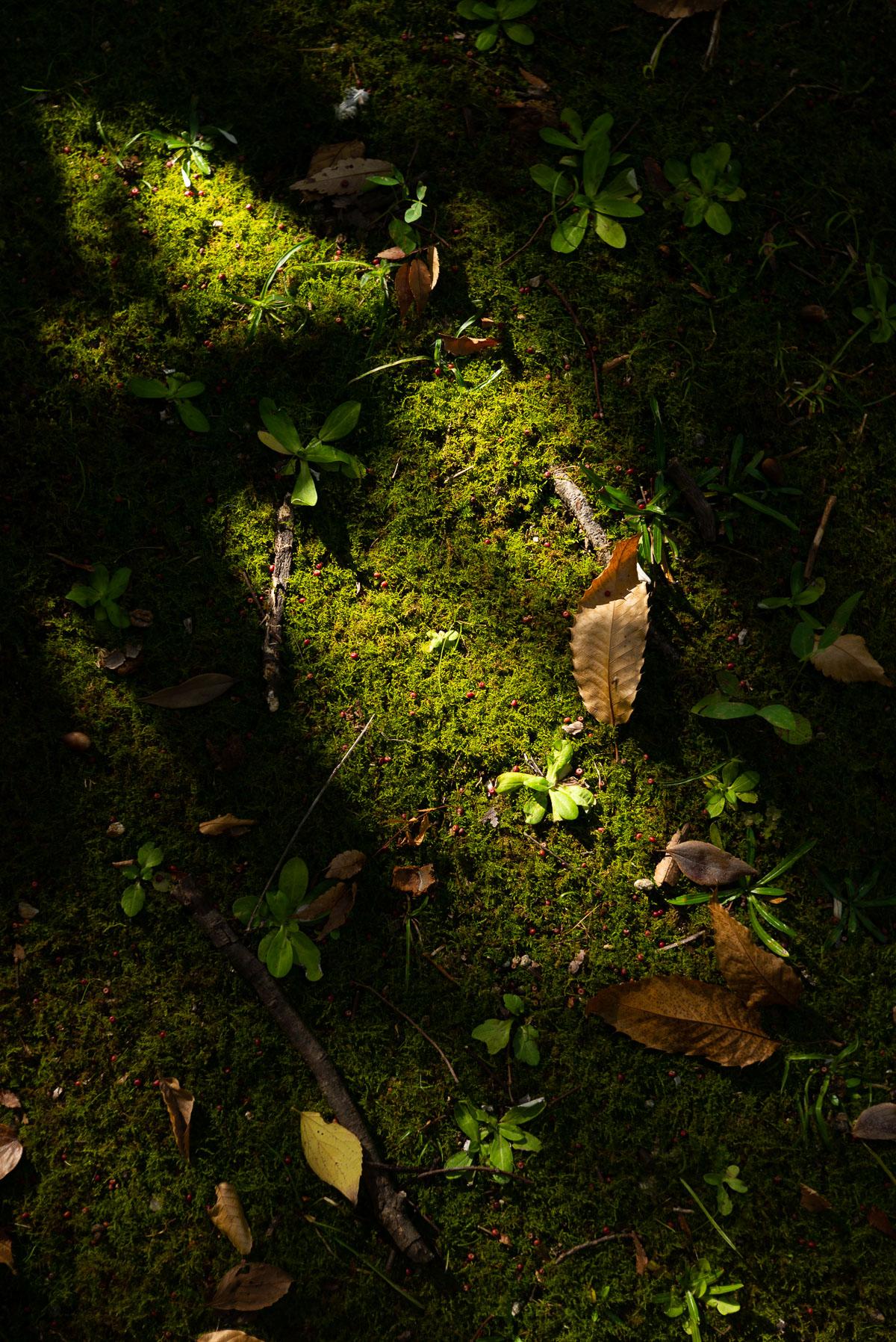 落ち葉と陰影