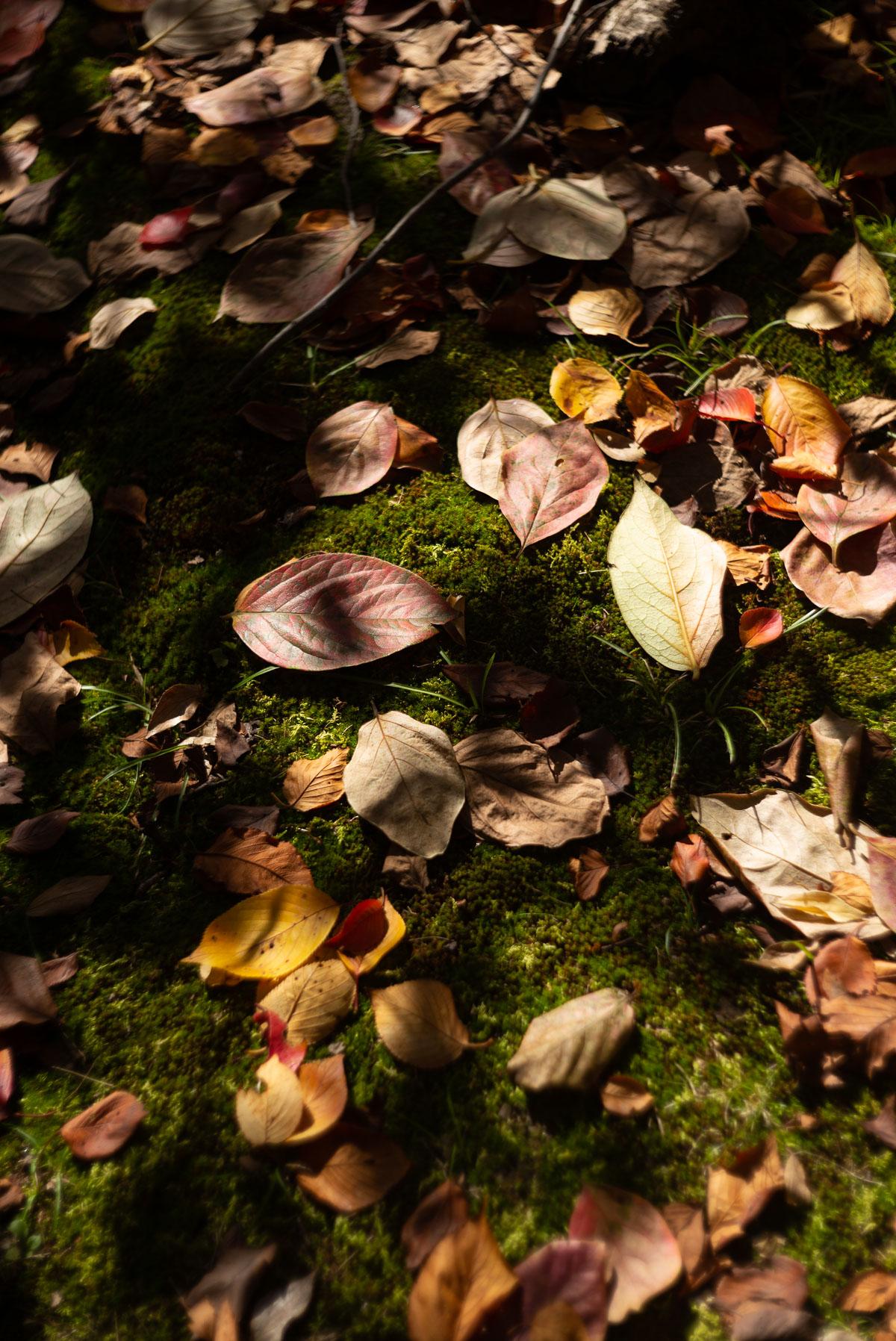丸い落ち葉と陰影