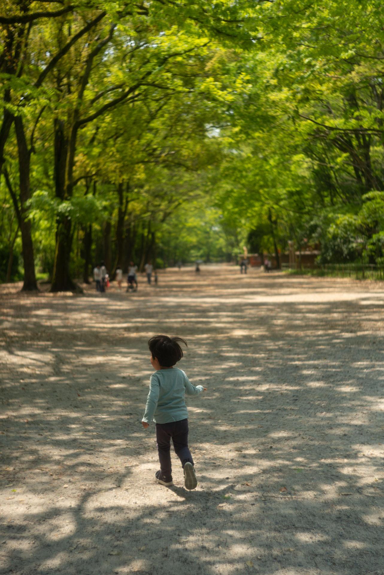 糺の森を散歩