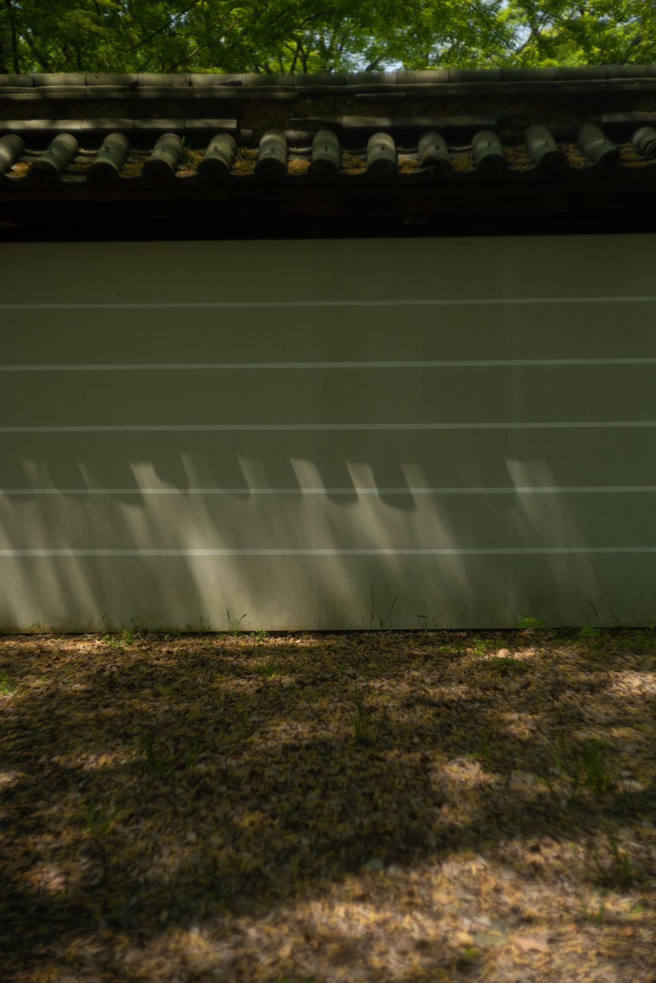 糺の森に伸びる影