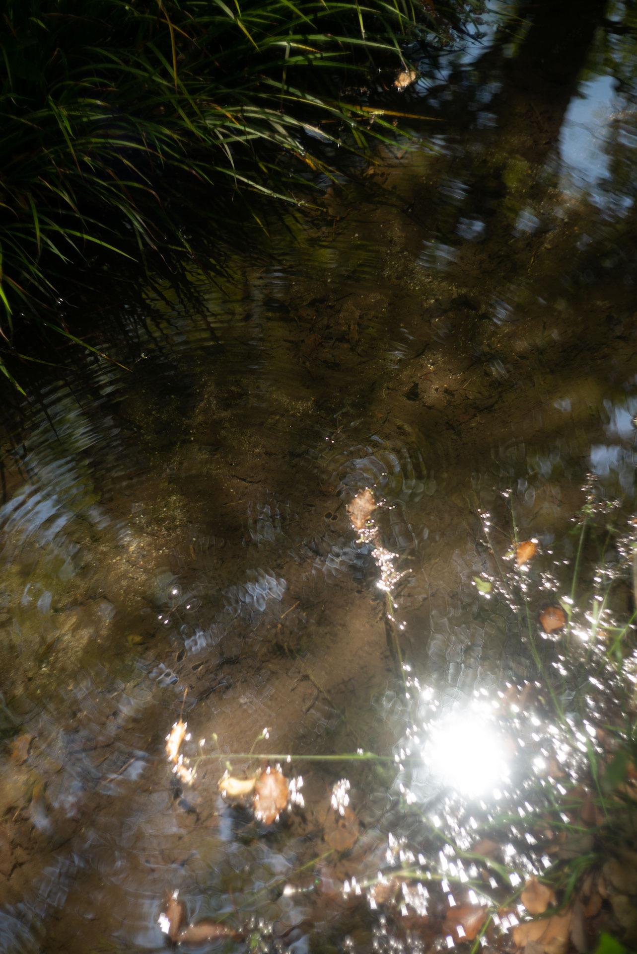 糺の森の川の光