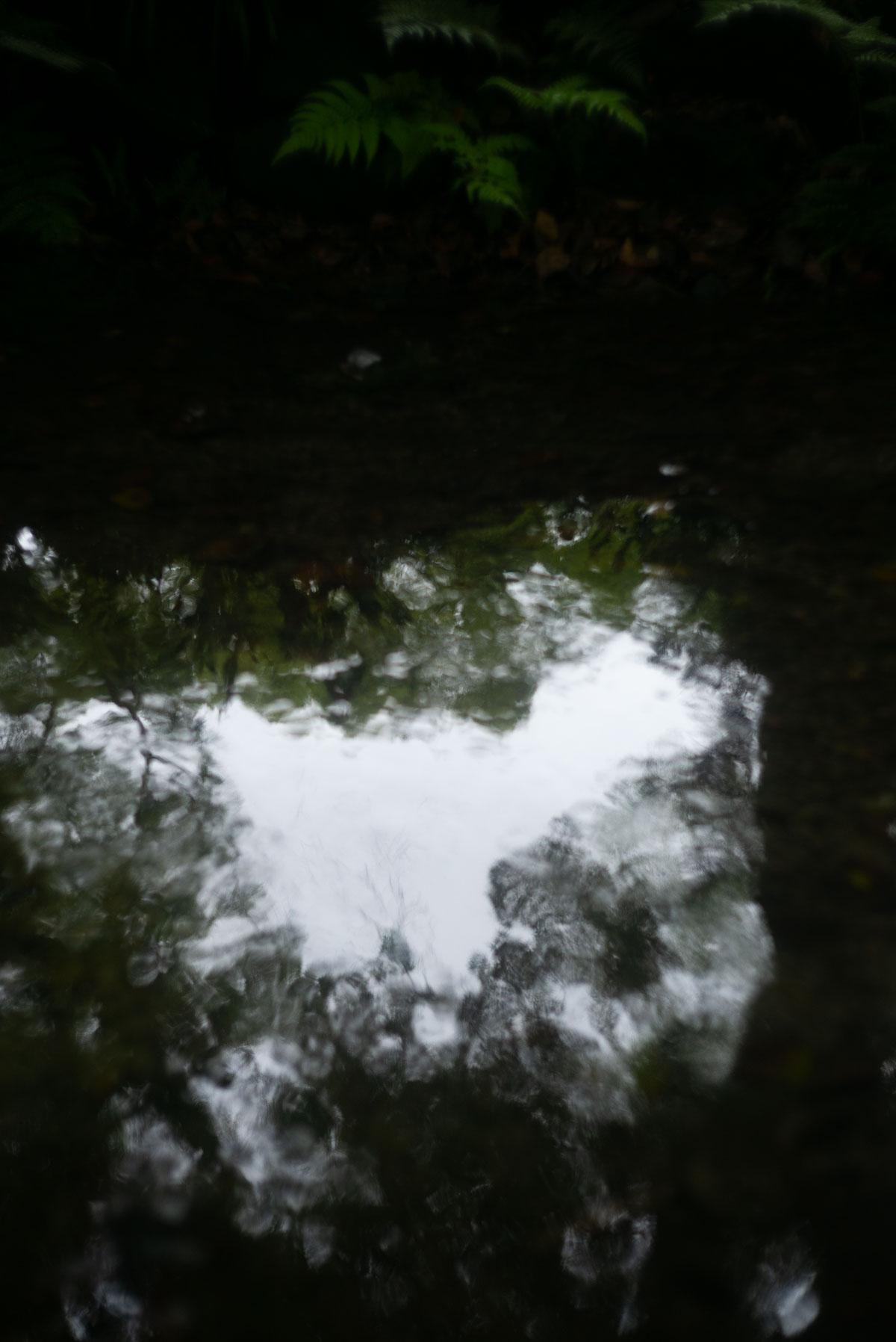糺の森の水面