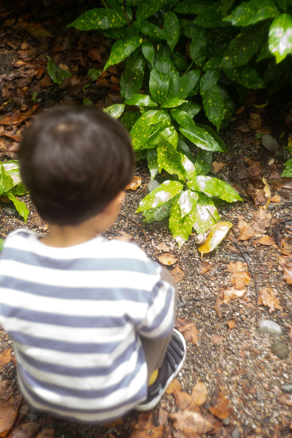よく見える葉っぱの上で観察