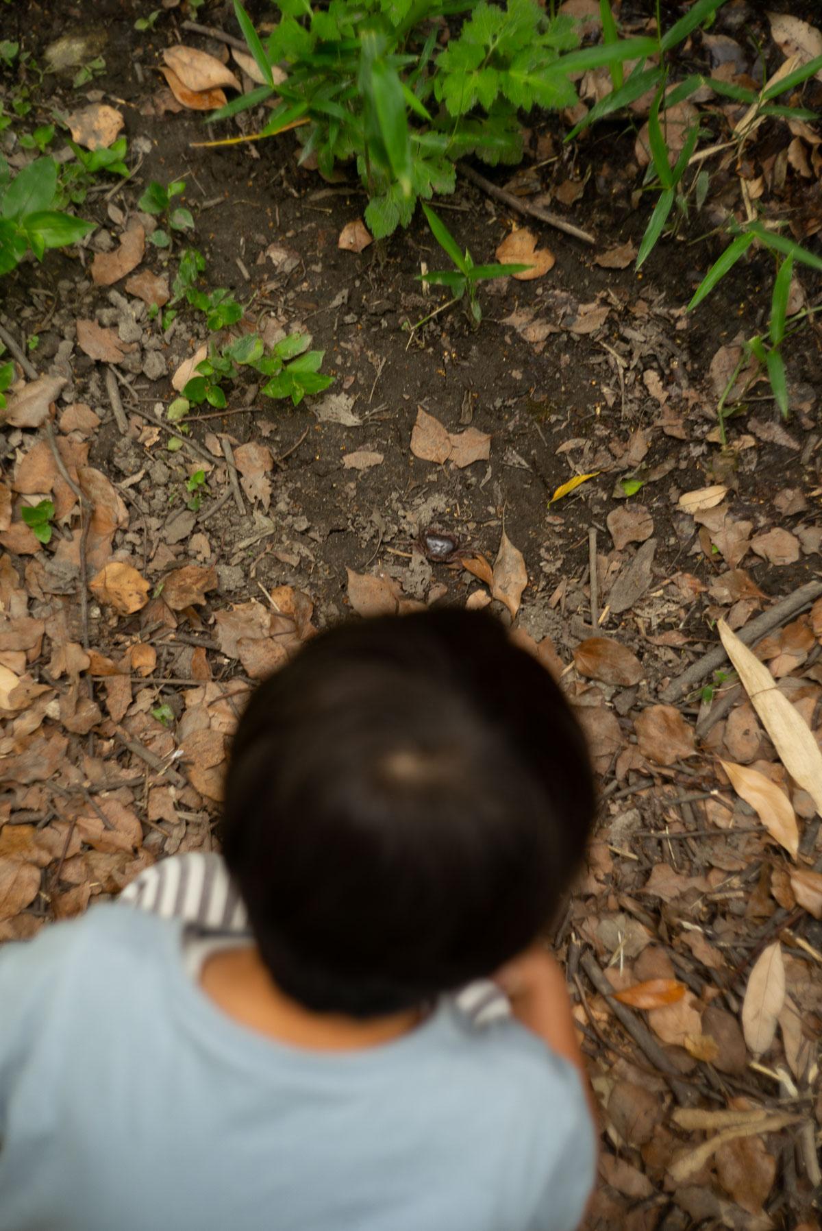 糺の森でカニを発見