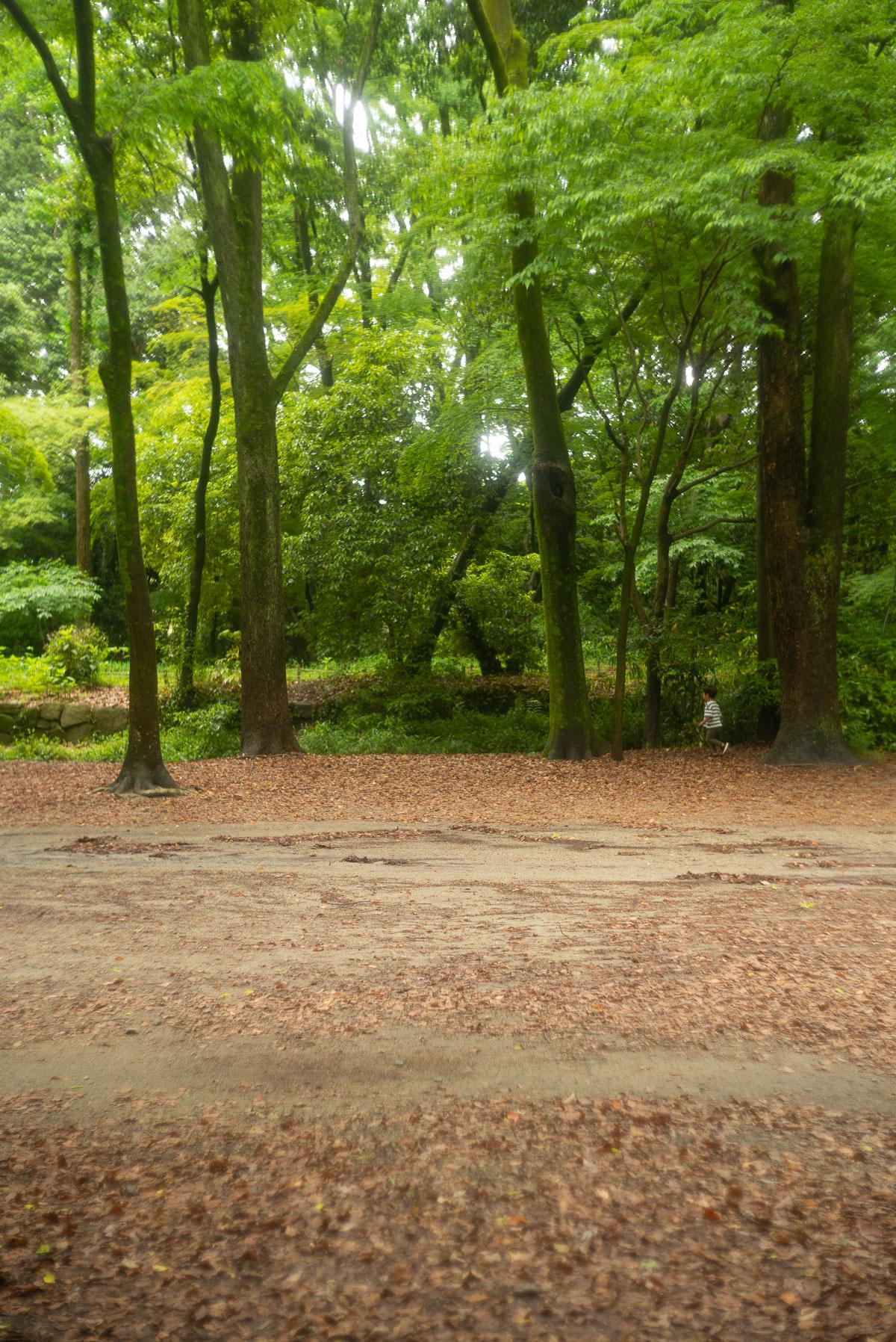 糺の森を走るタイチ