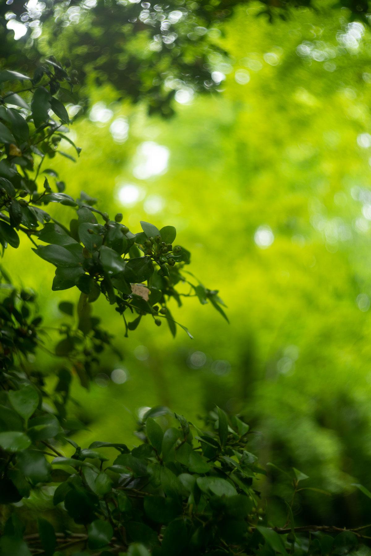 糺の森の緑