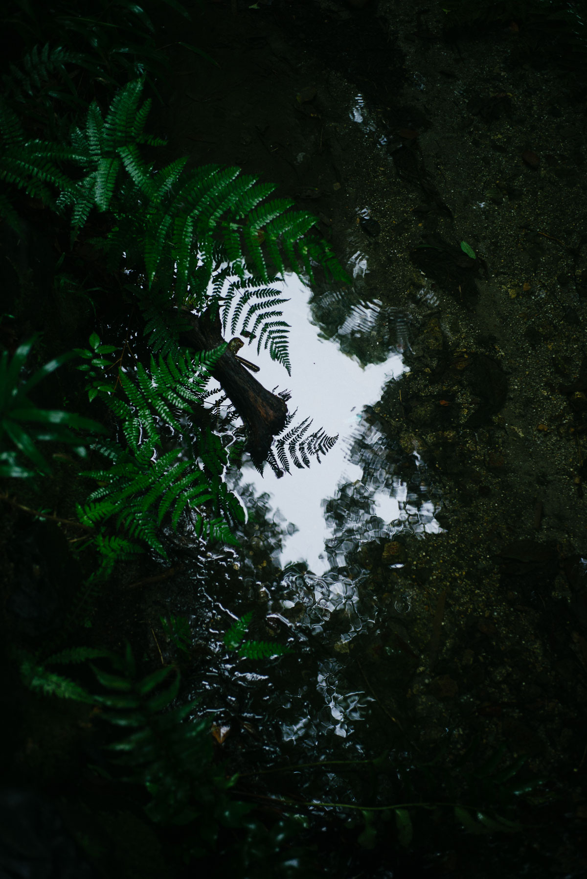 ひたすら雨の休日、糺の森で