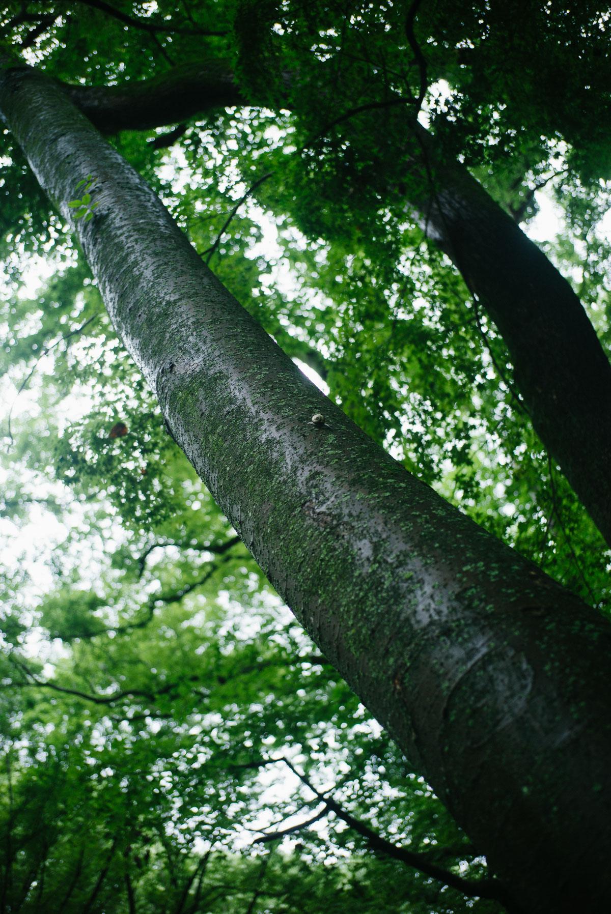 高いところまで木を登っているカタツムリ