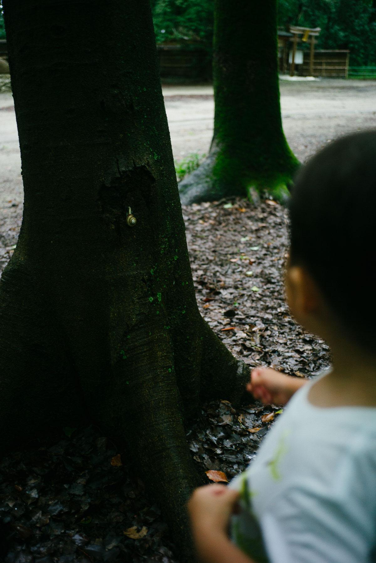 糺の森のカタツムリ