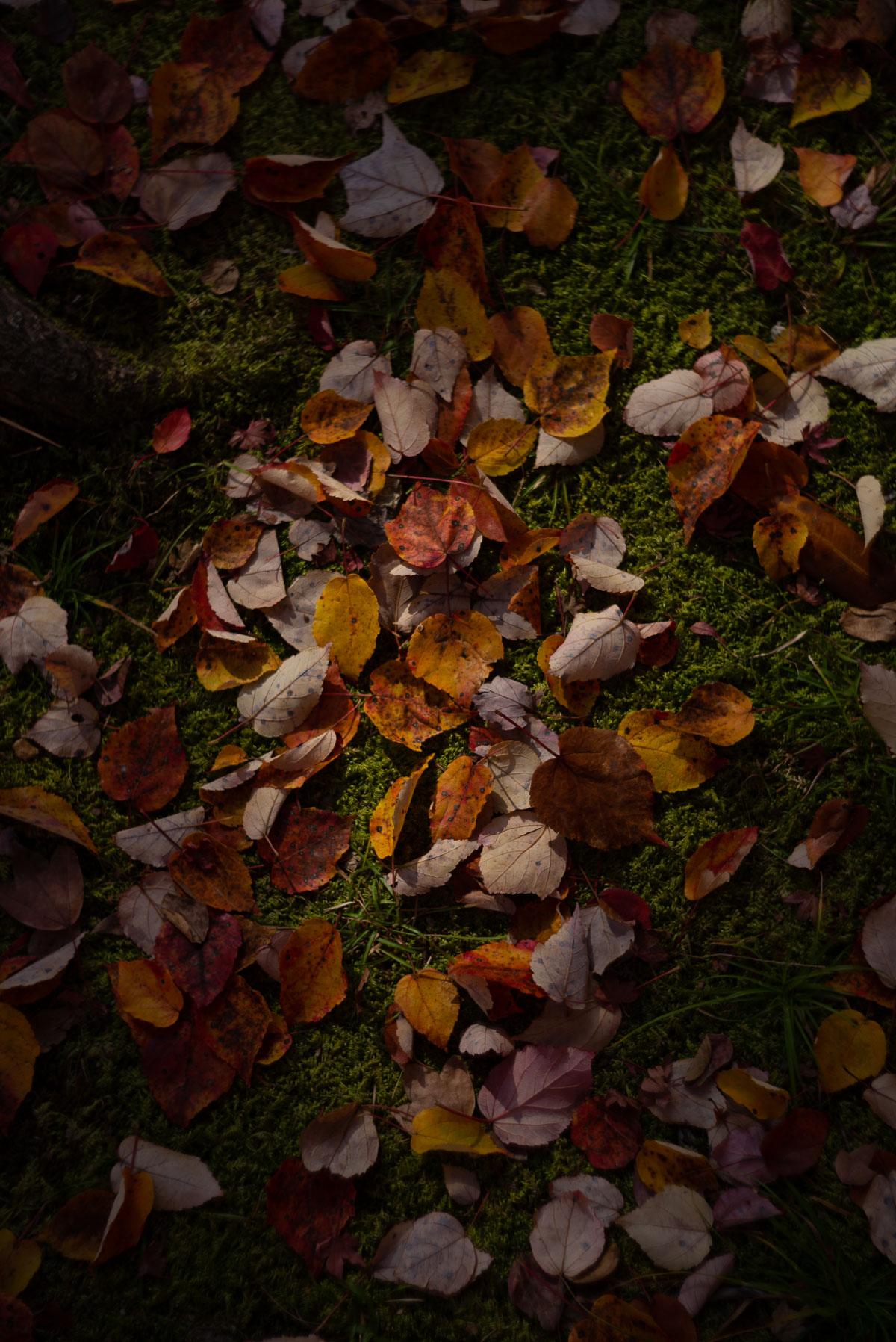 苔の上に積もった色とりどりの葉っぱ