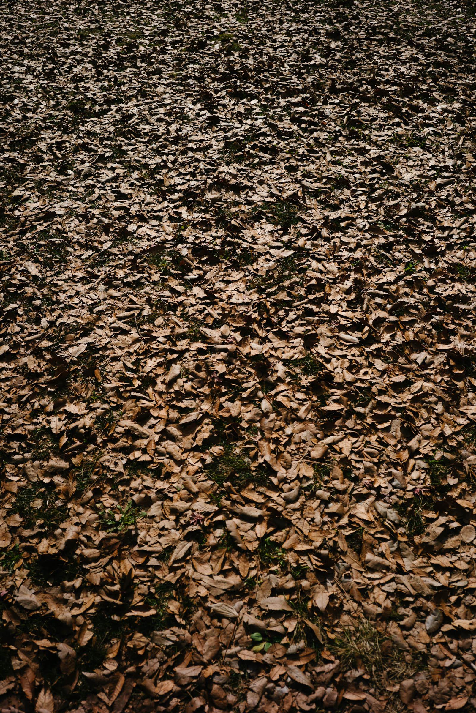 御所の落ち葉