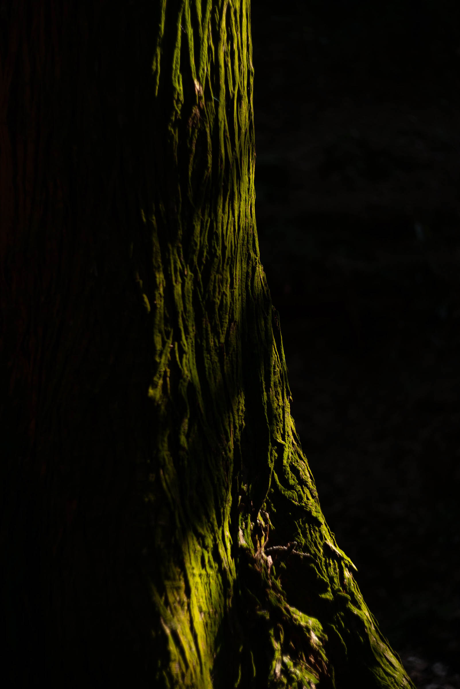 美しい苔むした木