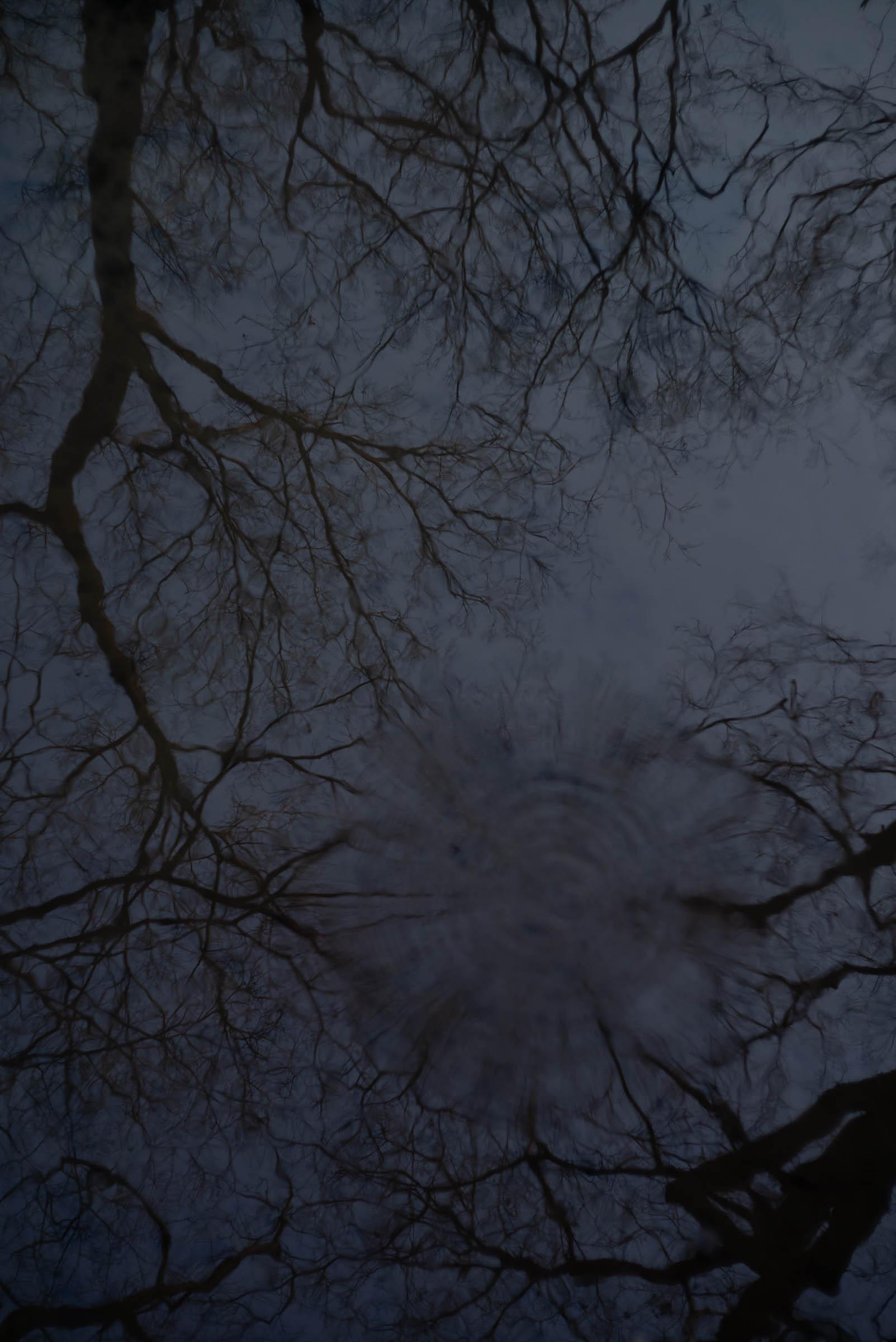 川に映り込む糺の森