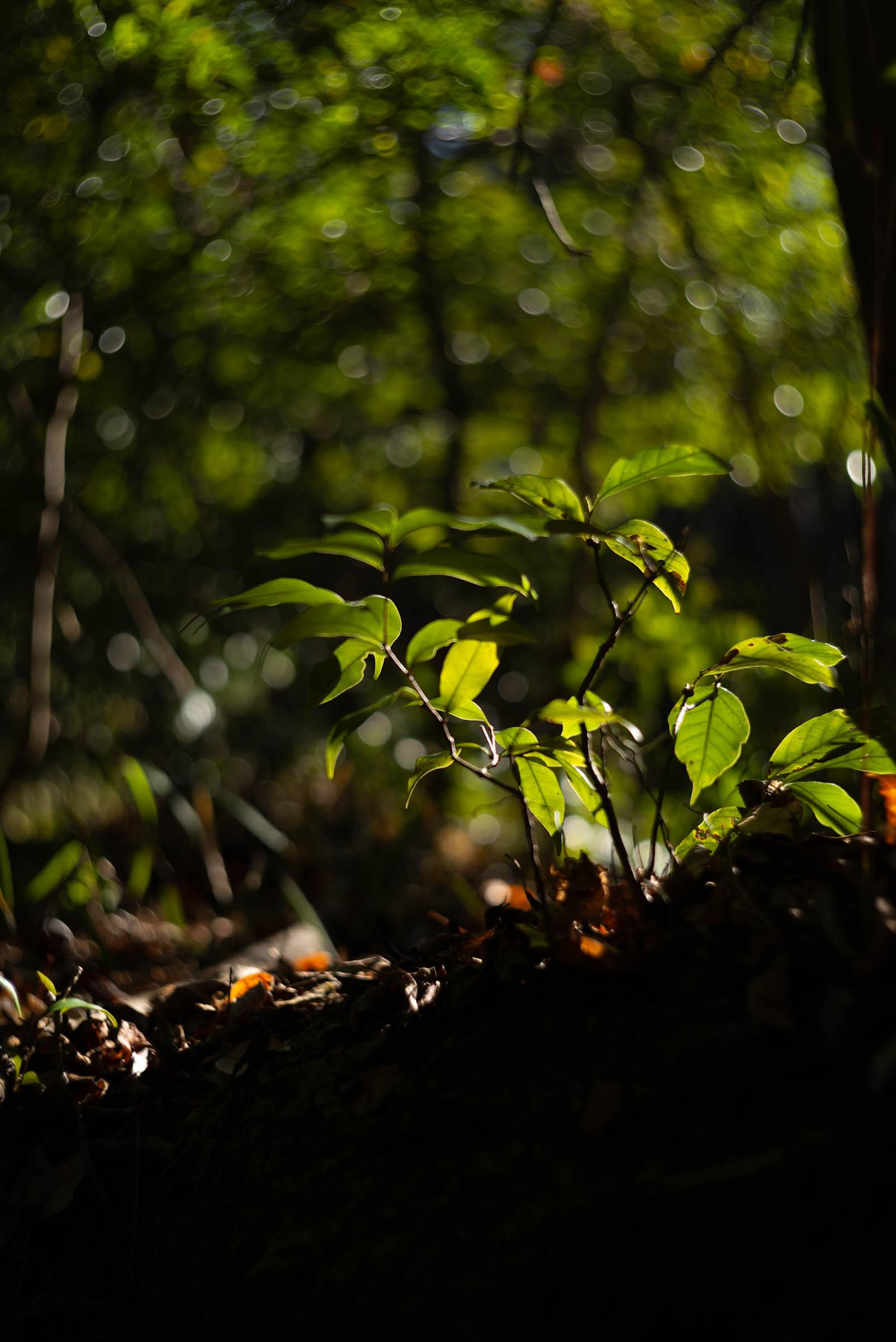登山道の木々