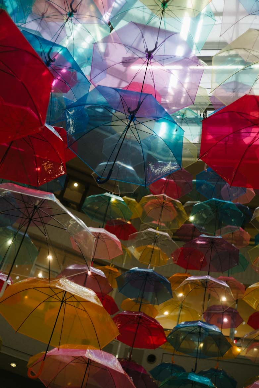 ビブレの傘
